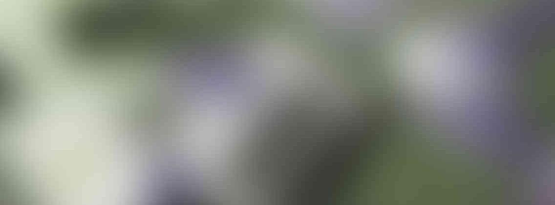 http://ladybuggz.com/wp-content/uploads/2013/03/relay_slide_3_v01-1136x420.jpg