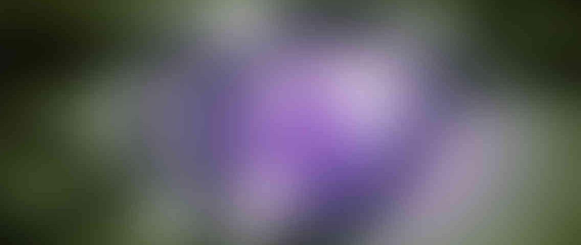 http://ladybuggz.com/wp-content/uploads/2013/03/standout_slide_3_v01-1136x480.jpg